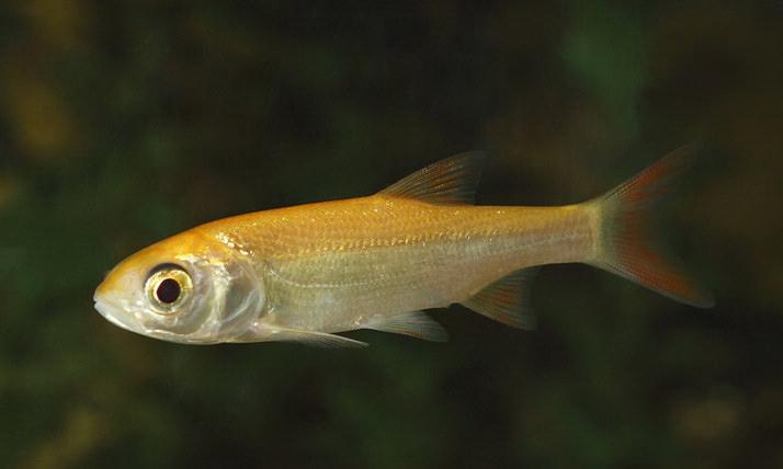 Japan koi teichfische von professionellen z chtern for Teichfische verkauf